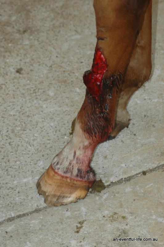 leg wound #9