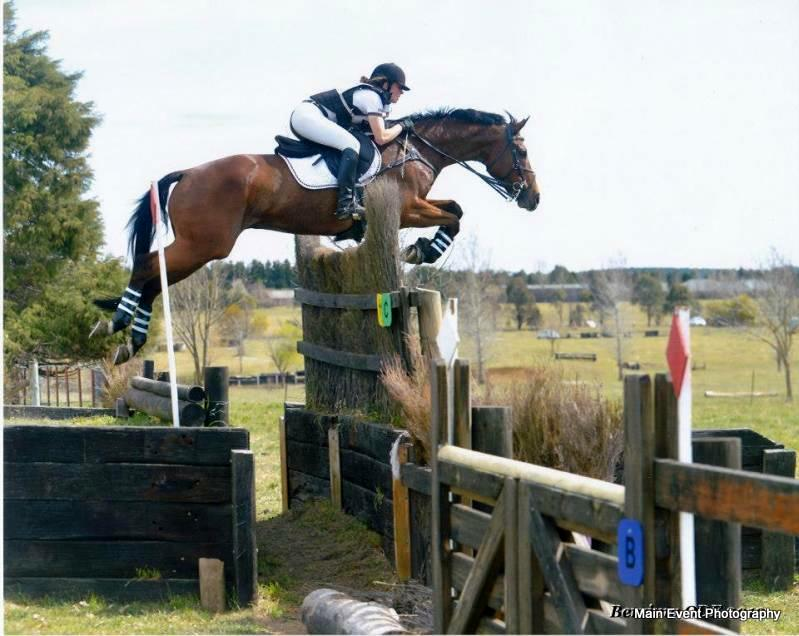 Horse For Sale Exceptional Eva 105 Eventer An Eventful Life