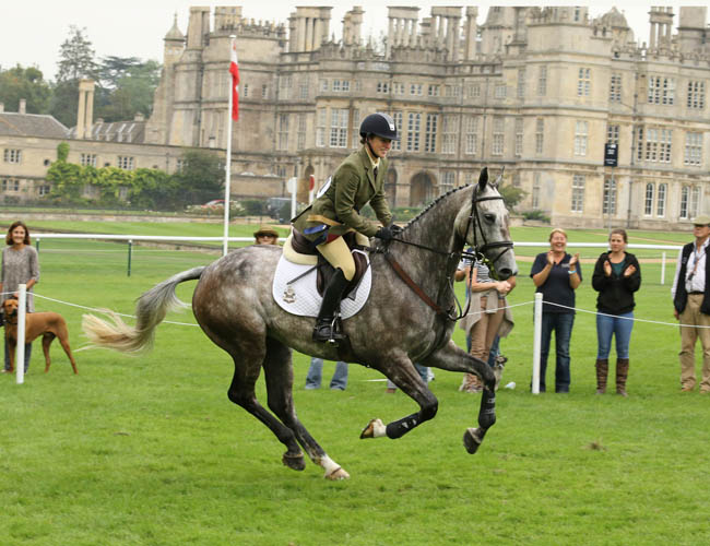 Dubarry Burghley Young Event Horse Goes Virtual in 2020 | An Eventful Life