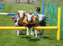 Barbury Lamb National 2013