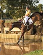 TS Jamaimo eventing horse for sale