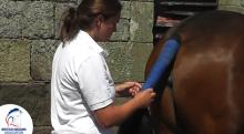 How to bandage a horse tail