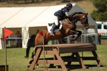 WHF Montpellier Horse for Sale