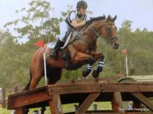 Eventing horse for sale Australia