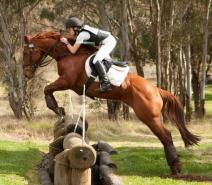 Eventing horse for free lease