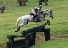 Eventing horse for sale