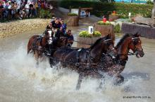 Carriage Driving FEI World Equestrian Games