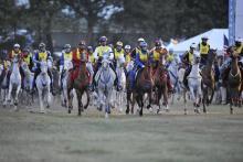 Endurance FEI World Equestrian Games