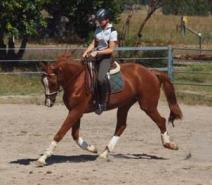 Southern Cross Tauruz  Horse for sale