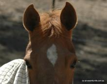 Equine eye problems