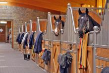 Luxury German equestrian property for sale
